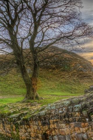 iPhone Wallpaper Tree, stone wall, sunset