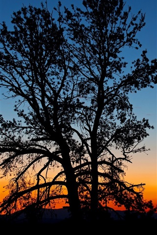 iPhone Wallpaper Trees, silhouette, night