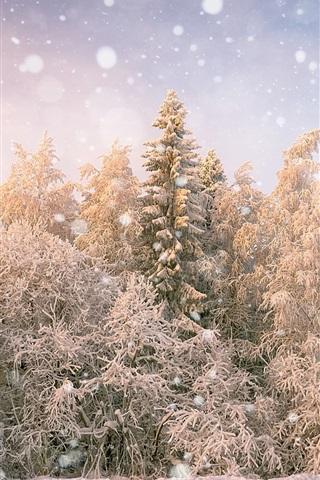 iPhone Wallpaper Trees, snowy, winter