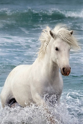 iPhone Wallpaper White horse in the sea, waves