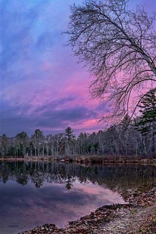 iPhone Wallpaper Birch, forest, lake, dusk