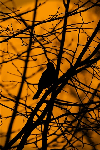 iPhone Wallpaper Bird in tree, twigs, silhouette, dusk