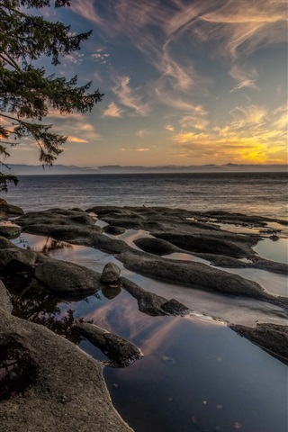 iPhone Wallpaper Canada, Vancouver Island, fog, sea, coast, trees, morning