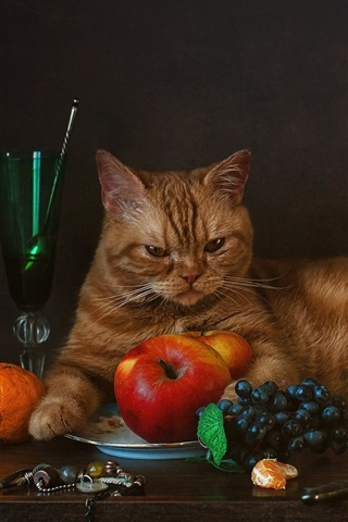 iPhone Wallpaper Cat and fruit, grapes, tangerines, apples