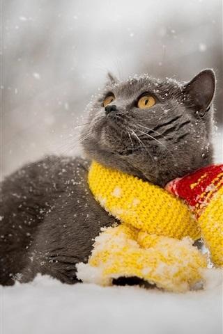iPhone Wallpaper Gray cat, snow, winter, scarf