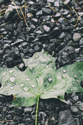 iPhoneの壁紙 緑色のメープルリーフ、水滴、石