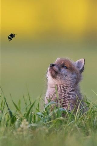 iPhone Wallpaper Little fox look at flight bumblebee