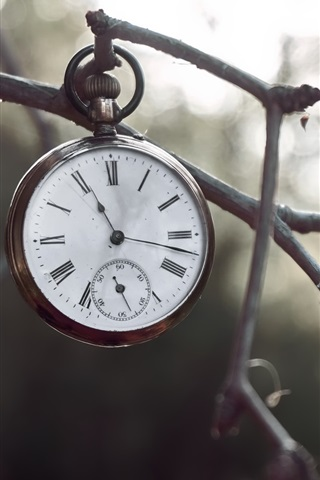 iPhone Wallpaper Pocket watch, twigs