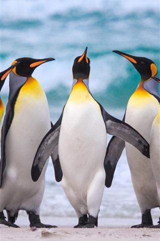 iPhone Wallpaper Royal penguins, sea