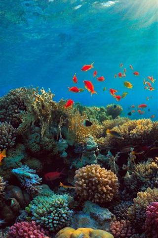 iPhone Wallpaper Sea, corals, fish, underwater