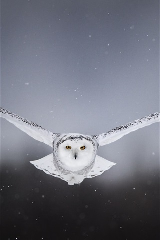 White Owl Flight Wings Front View 750x1334 Iphone 8 7 6 6s Wallpaper Background Picture Image
