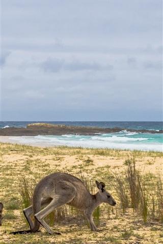 iPhone Wallpaper Australia, kangaroo, grass, sea