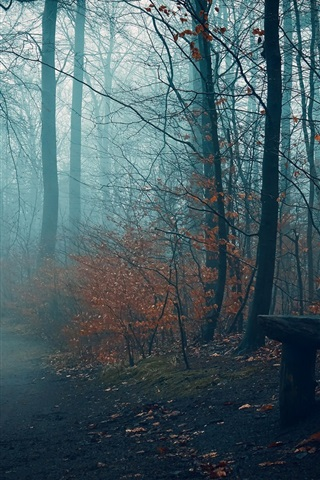 iPhone Wallpaper Autumn, trees, fog, bench, path, park