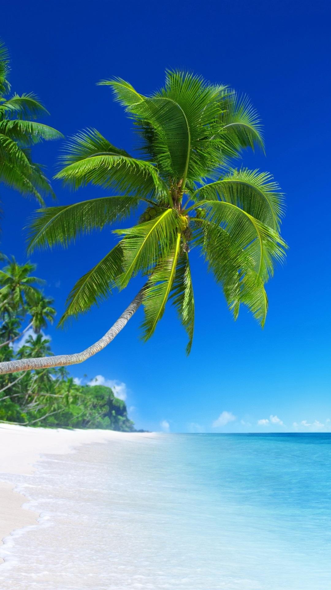 Beautiful Beach Tropical Paradise Palm Trees Blue Sea