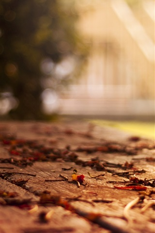 iPhone Wallpaper Bench, leaves, autumn