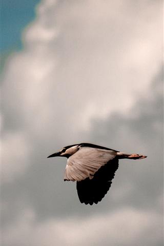 iPhone Wallpaper Bird flight, sky, clouds