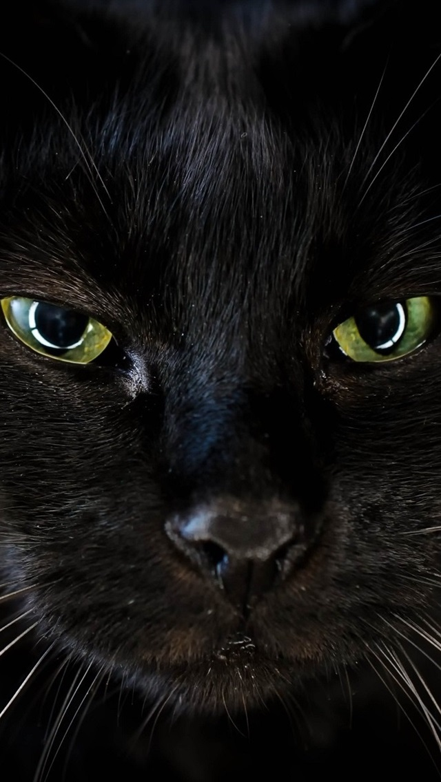 Wallpaper Black Cat Face Green Eyes 1920x1200 Hd Picture Image
