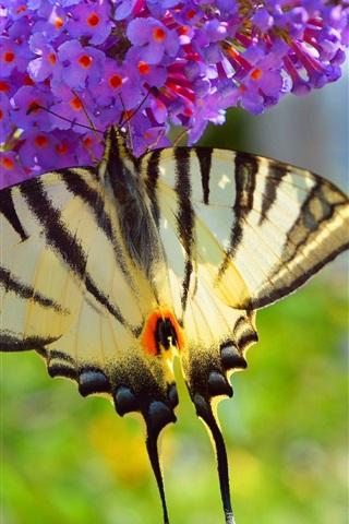 iPhone Wallpaper Butterfly, purple little flowers