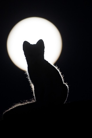 iPhone Wallpaper Cat silhouette, night, moon, darkness
