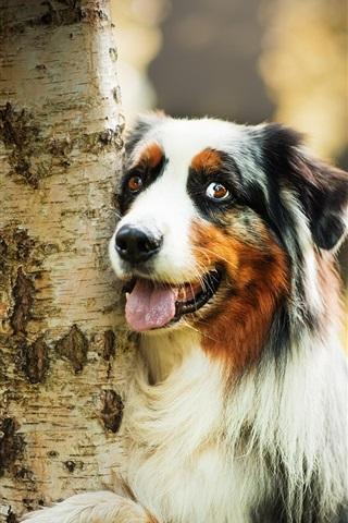 iPhone Wallpaper Cute dog hug a tree