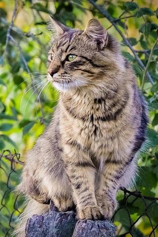 iPhone Wallpaper Cute kitten, fence, green leaves