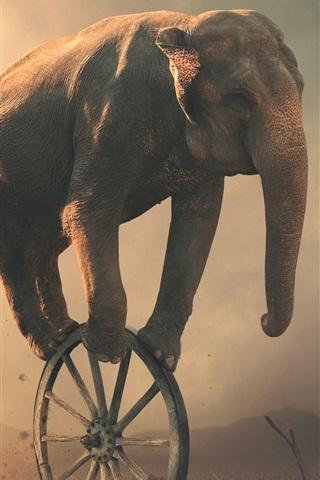 iPhone Обои Слонное колесо