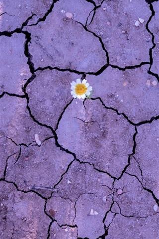iPhone Wallpaper Flower, earth, ground, crack