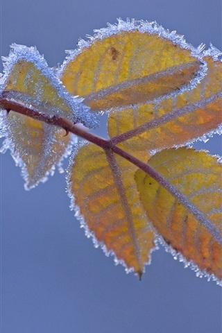 iPhoneの壁紙 霜、黄色の葉、寒い