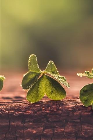 iPhone Wallpaper Green clovers, water drops, bokeh