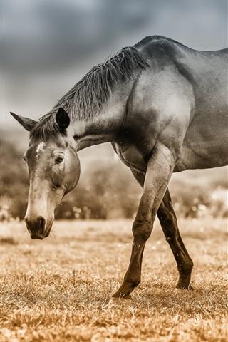iPhone Wallpaper Horse, grass, pasture