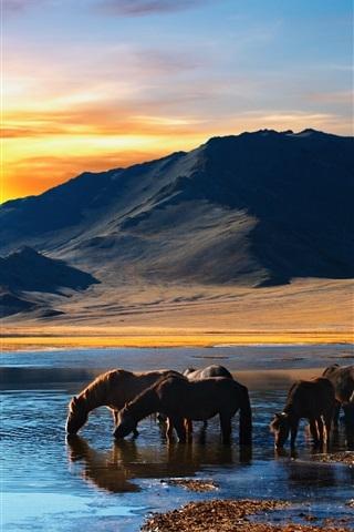 iPhone Wallpaper Horses drink water, lake, mountains, sunset