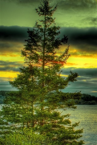 iPhone Wallpaper Lake, trees, stones, clouds, sunset, HDR style