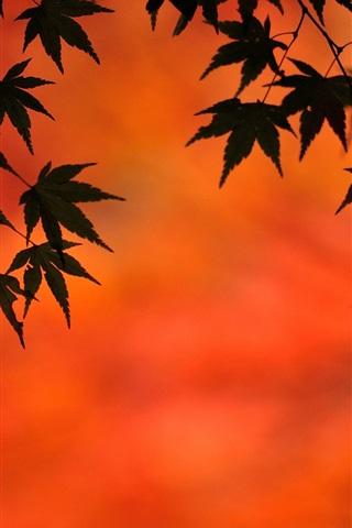 iPhone Wallpaper Maple leaves, autumn, dusk