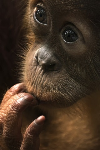 iPhone Wallpaper Monkey baby, look