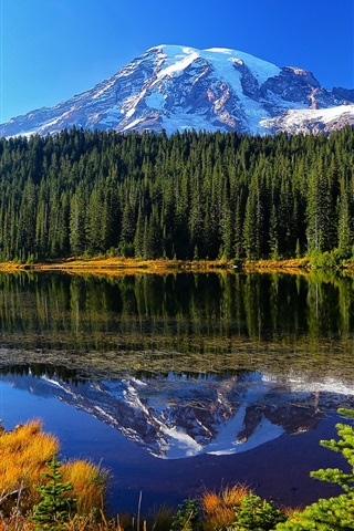 iPhone Wallpaper Mount Rainier National Park, lake, trees, mountains, water reflection, USA