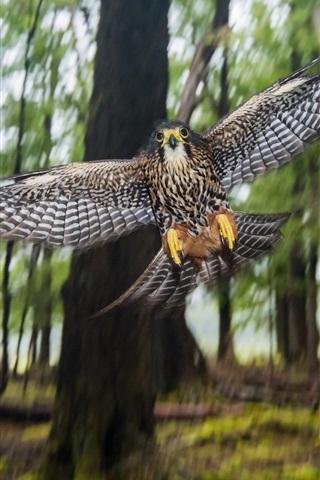 iPhone Wallpaper New Zealand Falcon, flight, wings, bokeh