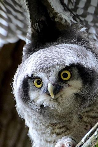 iPhone Wallpaper Owl, look, wings