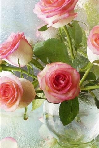 iPhone Papéis de Parede Rosas cor de rosa, vaso, vidro, gotas de água