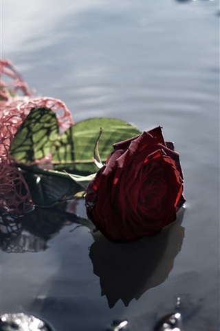 iPhone Wallpaper Red rose lost in water, puddle