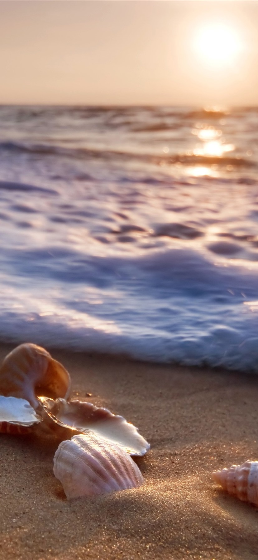 Wallpaper Sea Beach Seashells Waves Foam 3840x2160 Uhd 4k Picture Image