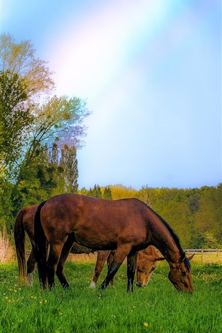 iPhone Wallpaper Some horses, meadow, grazing