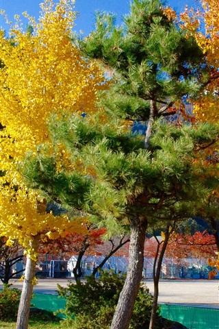 iPhone Wallpaper Tokyo, trees, colors, autumn