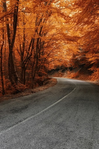 iPhone Wallpaper Trees, road, autumn