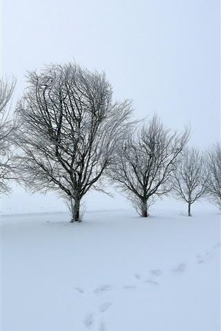 iPhone Wallpaper Trees, snow, dusk, winter, white world