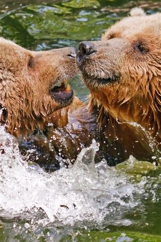 iPhone Wallpaper Two brown bears play in water, splash