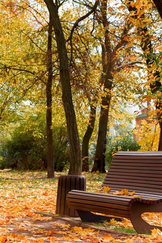 iPhone Wallpaper Ukraine, Cherkassy, park, autumn, bench, trees, leaves
