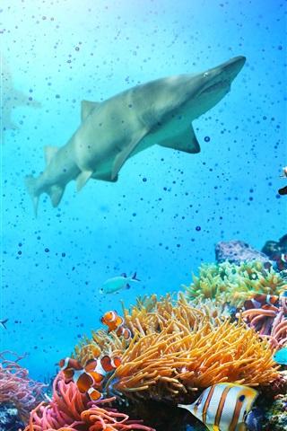 iPhone Wallpaper Underwater, fish, coral, shark, sea