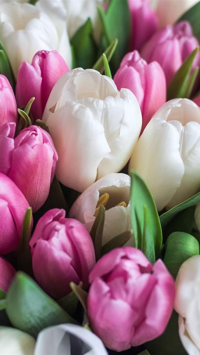 тюльпаны фото на айфон готовы сделать