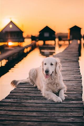 iPhone Обои Белый собачий отдых, деревянный мост, озеро, закат