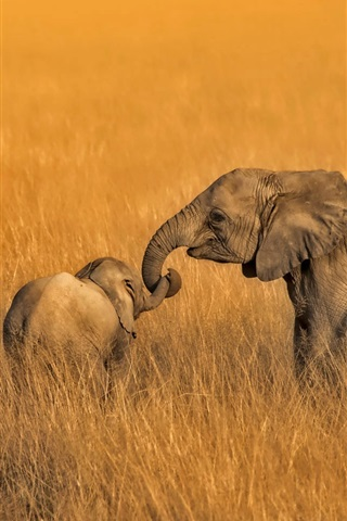iPhone Wallpaper Amboseli, Kenya, National Park, elephants family, grass